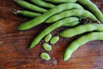 DSC_5640_Fava Beans_Arthur Koch