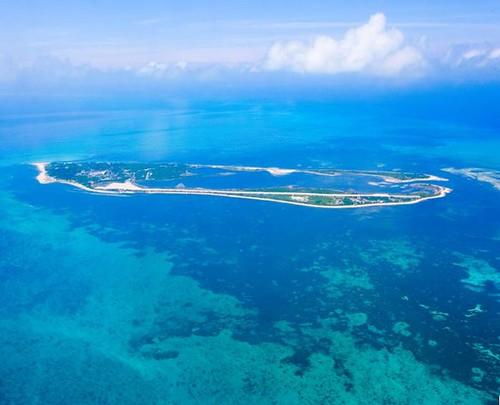 害羞檸檬鯊 東沙環礁保育新亮點   臺灣環境資訊協會-環境資訊中心