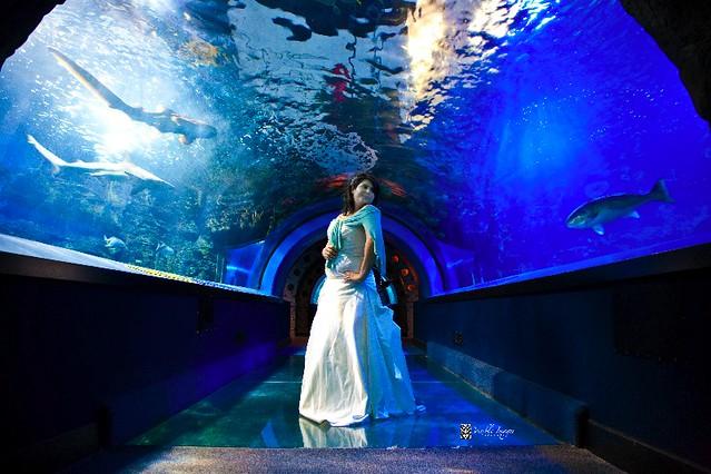 Newport Aquarium  Flickr  Photo Sharing