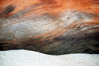 Cocobolo Driftwood tree in San Juanillo, Costa Rica