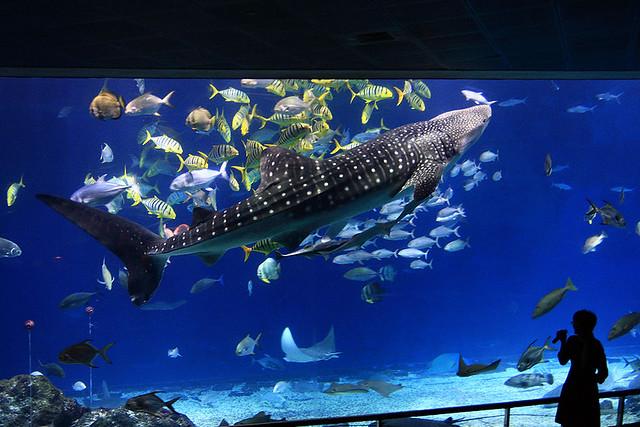 國立海洋生物博物館 鯨鯊 | Flickr - Photo Sharing!
