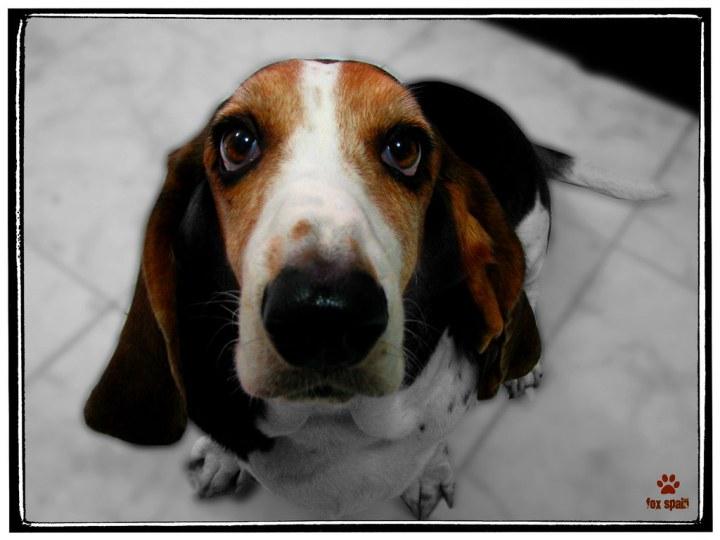 El Perro, fiel amigo / The Dog, Faithful friend