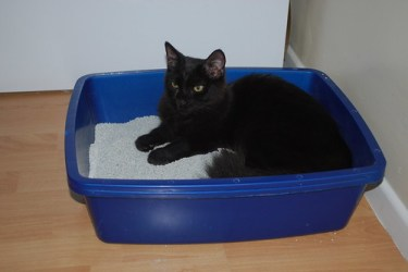 5 Reasons why your cat won't use the litter box -black cat in litter box