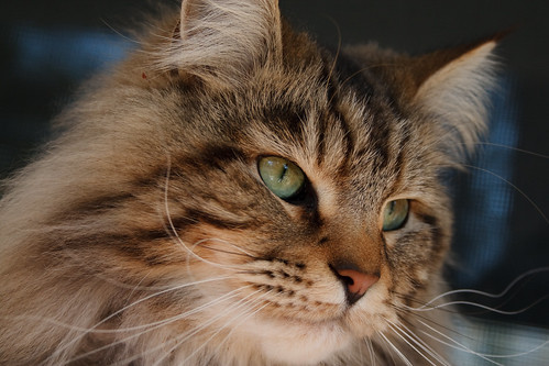 Cosmo the Wonder Cat
