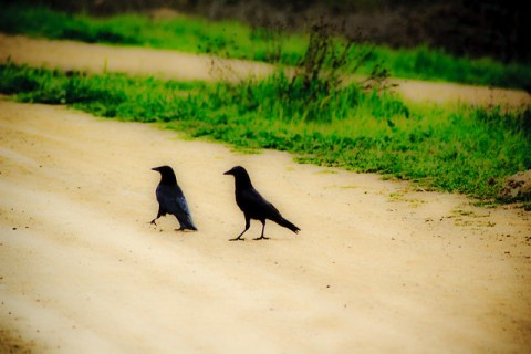 Two Crows Grounded