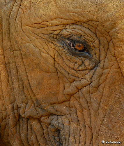 The Eye of the Elephant by Martin_Heigan