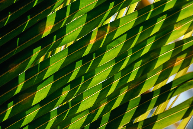 Patterns in nature  Palm leaves  shadows Patterns in