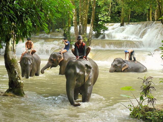 Afternoon elephant bathing