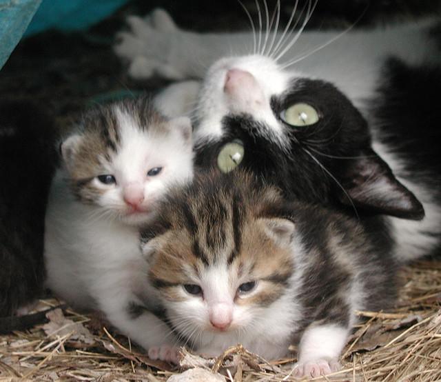 Teardrop-kittens-4-24-05-pic01