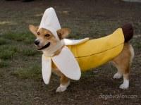 Fun Dogs in Halloween Costumes