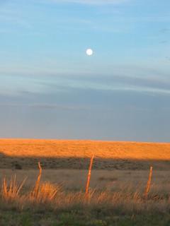 Glowing grassland