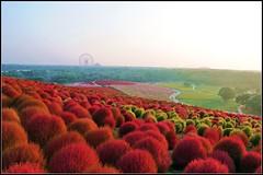 EXPLORE FP: Hitachi Seaside Park