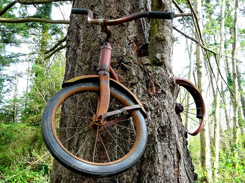 Don't Leave Your Bicycle Next to a Tree for Thirty Years