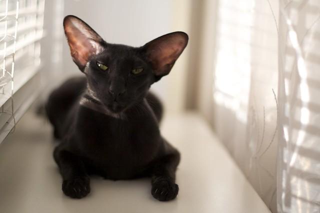 My cat, Usiaka