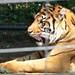 Zoo 642
