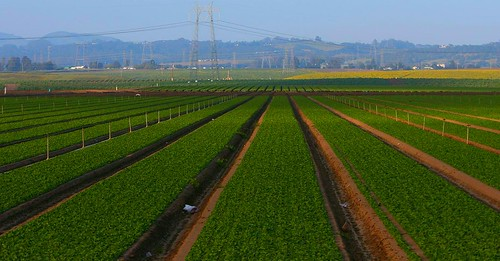 Terres cultivées en Californie (USA)
