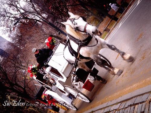 รถม้าที่ Central Park New York