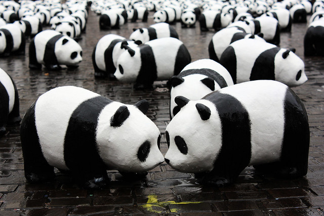 Panda kiss  Flickr  Photo Sharing