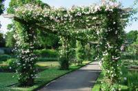 Rose pergola | Flickr - Photo Sharing!