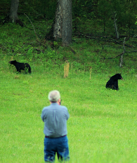 Cades Cove Black Bears, Great Smoky Mountains National Park in Tennessee, May 5, 2009