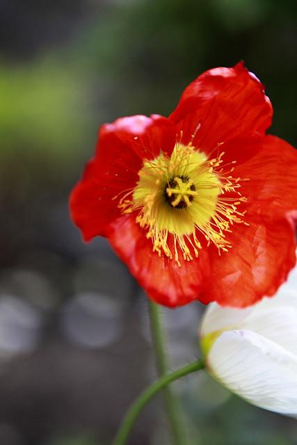 Man, I love this flower.