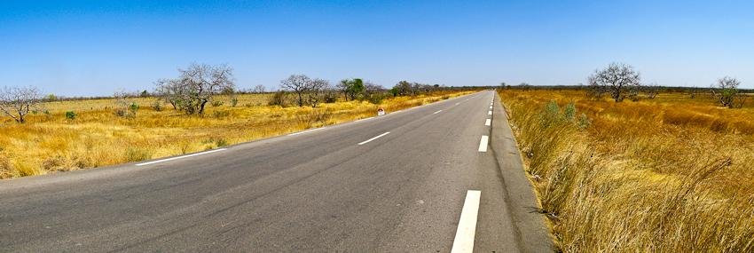 Gelbe Gräser an Hauptverbindungsstrasse