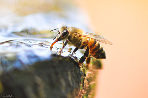 Bee water hole