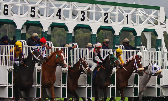 Start of a Horse Race