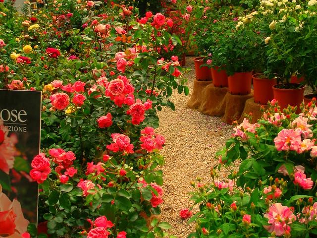 Perugia Flower 2008