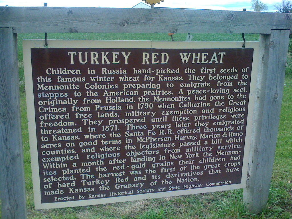 Turkey Red Wheat