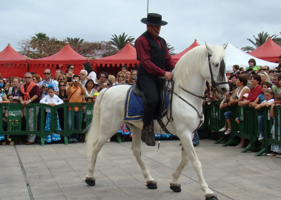 feria abril Las Palmas Gran Canaria  Caballos 74