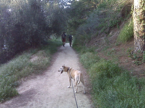 Two hikers and Goldie on Arroyo Verde Path