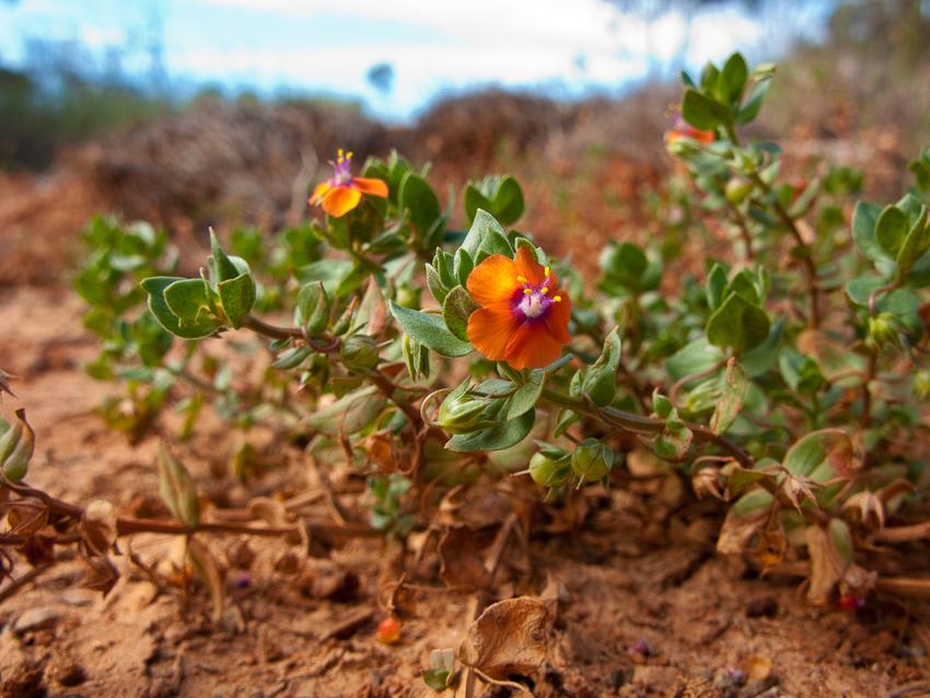 Winzige Blüten