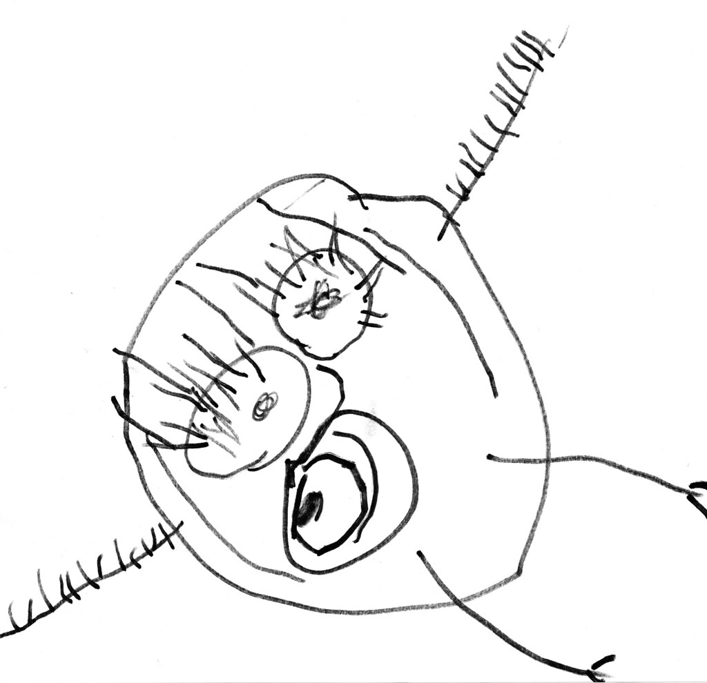 Elegant Coloring Pages For 8 Year Old Girls
