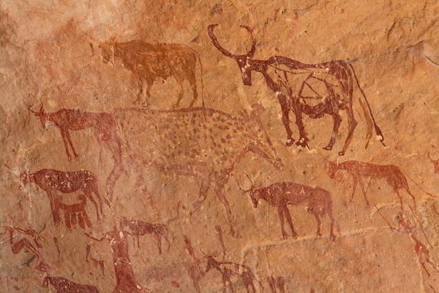 Multicoloured herd