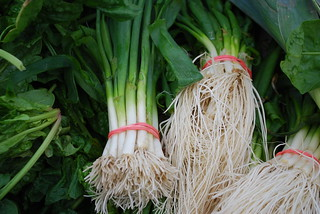 Scallions bunched with red rubber bands