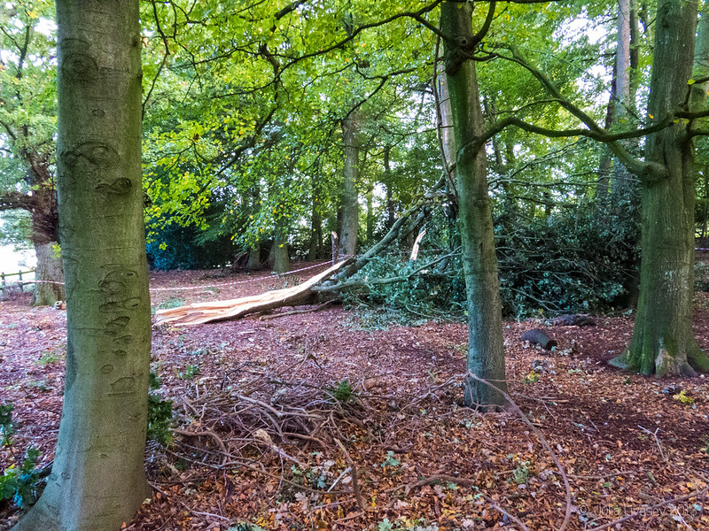 Fallen Tree in the Woodland Walk