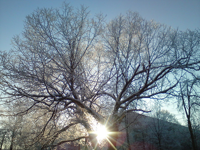 Морозное утро // Frosty morning