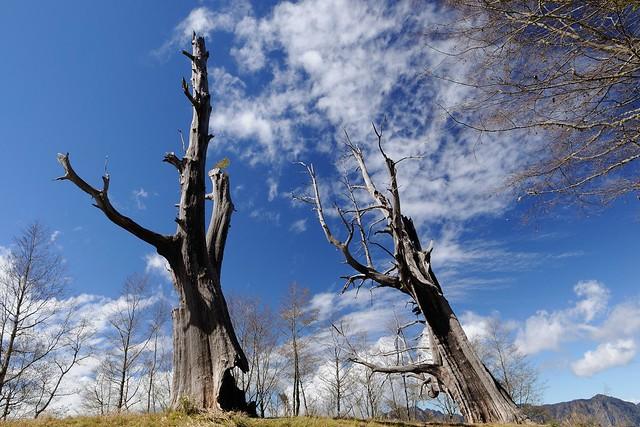 尋訪千年不變的愛情 - 塔塔加夫妻樹 - 恩恩把拔的部落格 - udn部落格