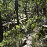 06 Viajefilos en Australia. Cathedral Rock NP 27