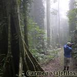07 Viajefilos en Australia. Dorrigo Rainforest NP 05