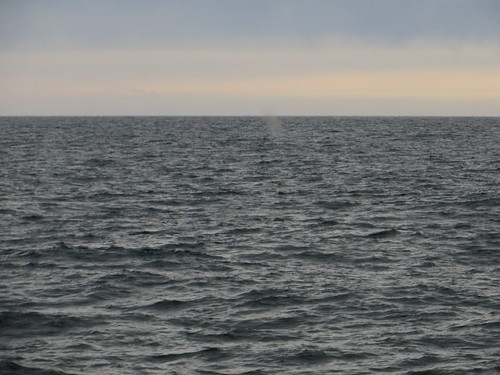 can you see the whale