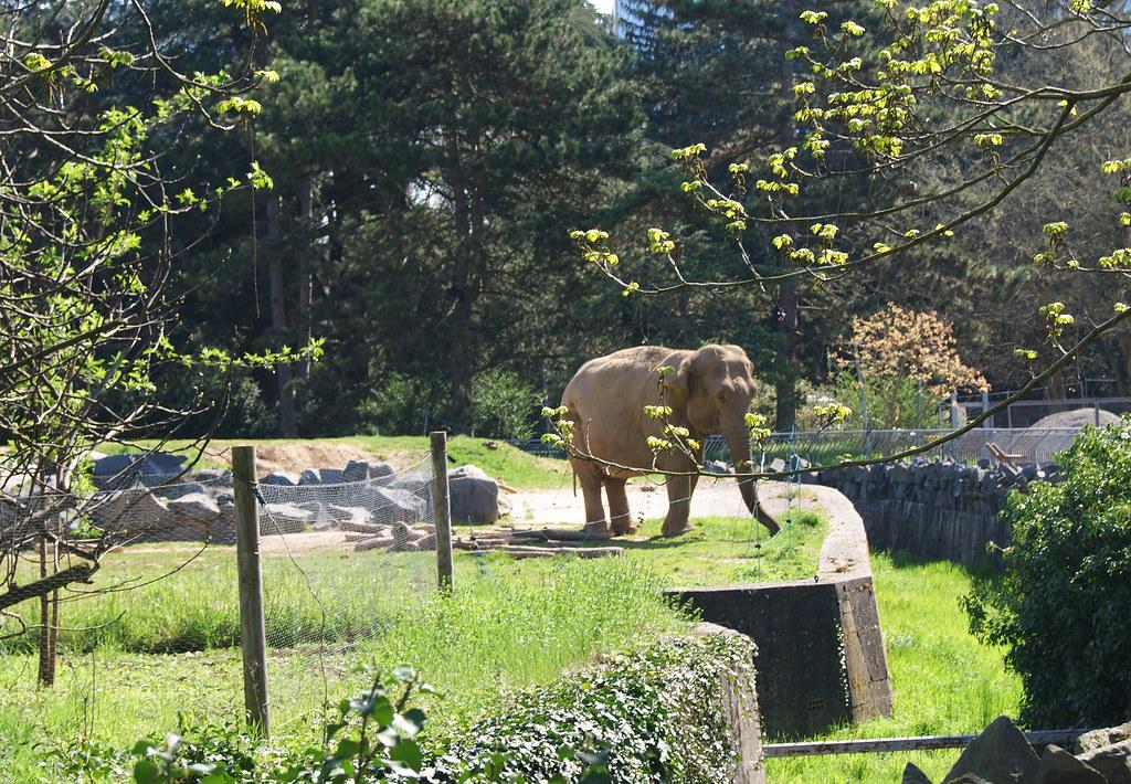 Éléphant de la Tête d'Or