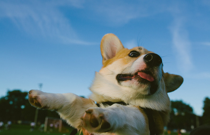 dog_park_aug2013_web-011