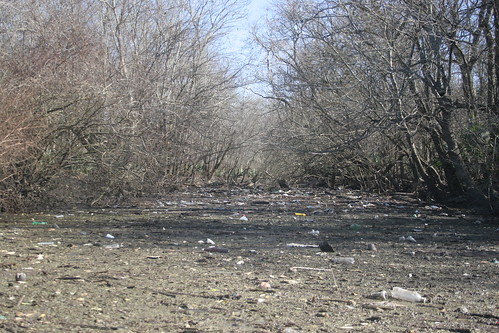 Blockage #15, downstream view