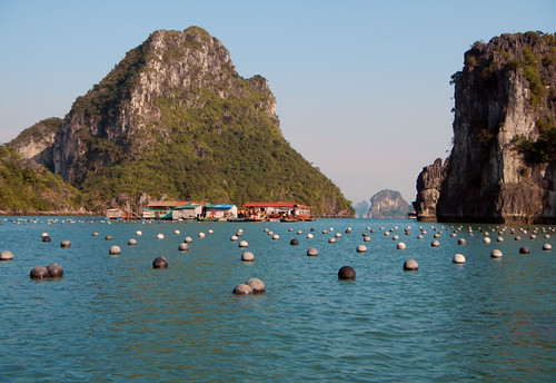 nets containing pearl oysters (Halong Bay, Vietnam)