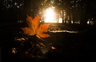 Autumn! // 06 10 13