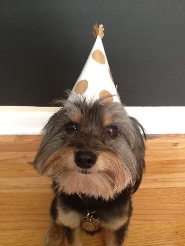 Happy 3rd birthday, Walter!
