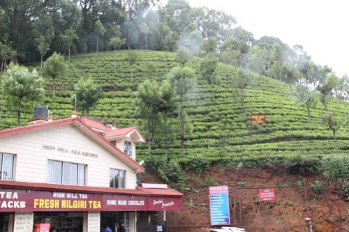 Nilgiri tea and chocolate