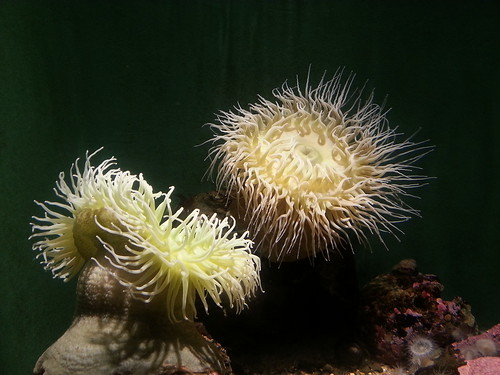 See Urchins